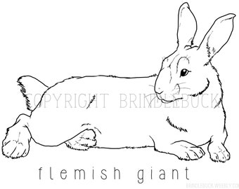 mini lop coloring pages | Siberian Husky Dog Coloring Page download child art by ...