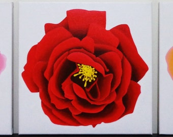 Roses Bloom Small Acrylic Canvas Painting Series