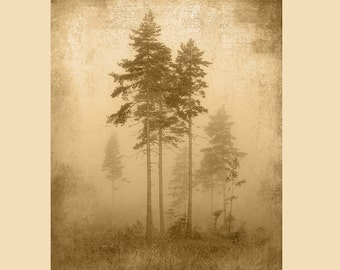 Foggy Tree Silhouette - Woods - Forest Nature Rustic Artwork Printedon Wood Panel - Made in USA