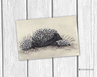 "Original illustration ""hedgehog"""