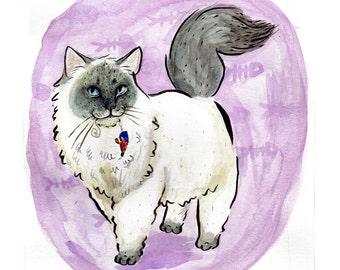 Hand Painted Blue Point Ragdoll Cat Illustration Original Painting