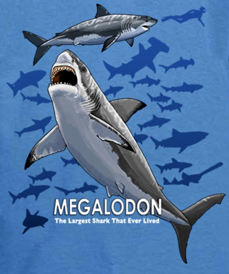 Bigger Than Megalodon Shark Toy : Megalodon prehistoric shark youth t shirt by coyoteesmaine