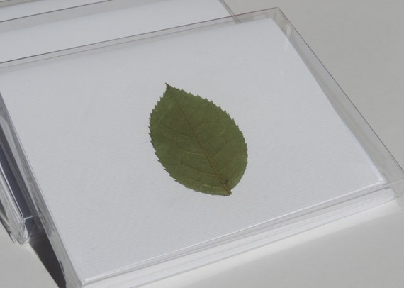 Pack of 5 Blank Designer Leaf Note Cards, Cotton Linen Paper, Cotton Linen Envelope, Pressed Plants, Green Leaf Note Card, Blank Note Card