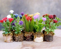 Miniature flower plants with birch base pot. Various colors and sizes. Set of 3