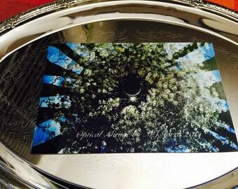 Optical Mirage 4x6 metallic Kodak paper  print