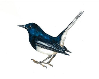 Magpie -  Watercolour Print (30*40cm / 16*12inches)