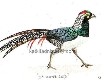 23  June 2015, Day 174 - Lady Amherst's Pheasant  - Original ACEO watercolor painting