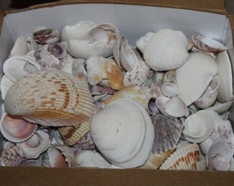 Sea Shells and Sea Shell Pieces, Almost 8 pounds, Ocean Shells and Broken Sea Shells, Bulk Sea Shells, Some Broken, Seashells vary species.