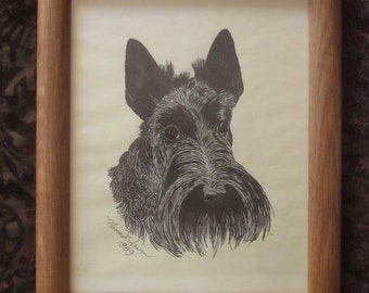 Pen and Ink Scotty Dog Portrait