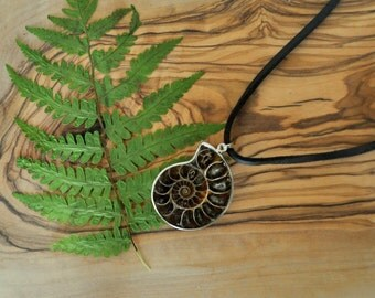 Ammonite Fossil Pendant Necklace - Leather Cord