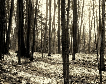 SUNLIGHT THROUGH WOODS--Nature Photography, Michigan Photography, Woods, Trees, Sepia, Sunlight, Shadows, Woodland Photography, Woodlands