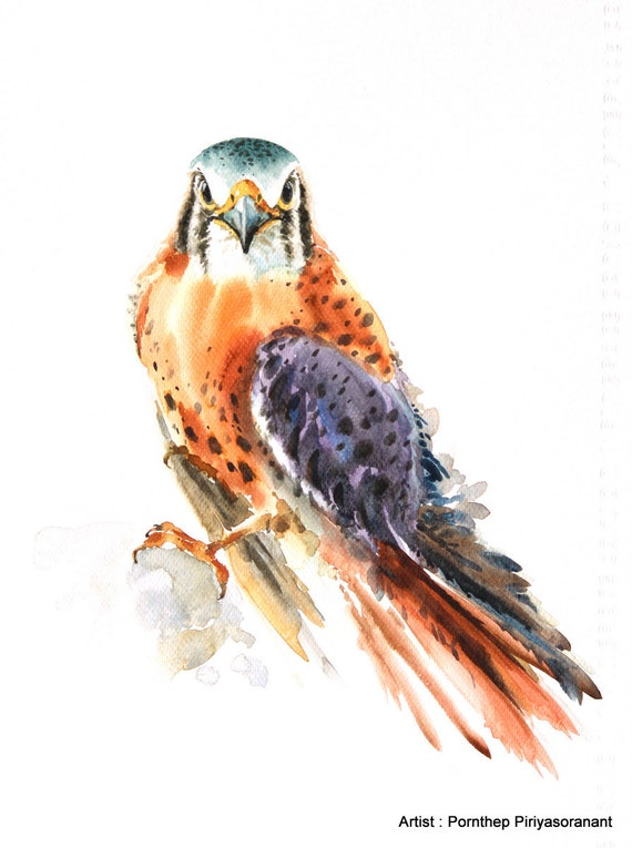 Hawk painting watercolor - photo#20