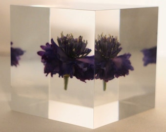"Acrylic paper weight ""Eternal cornflower"""