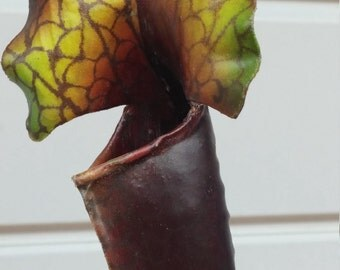 Brown and Green Pitchers Set of 2
