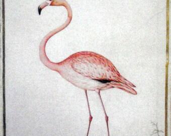 Flamingo Vintage Art Painting Print On Canvas Pink Audobon Birds Chic!
