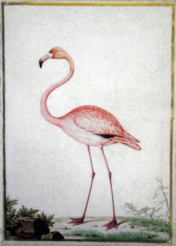 Flamingo Vintage Art Painting Print On Canvas Pink Audobon
