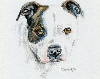PItbull Dog Drawing, Colored Pencil Pit Bull, mini art, Dog Lover Gift, Pit Bull Lover Gift