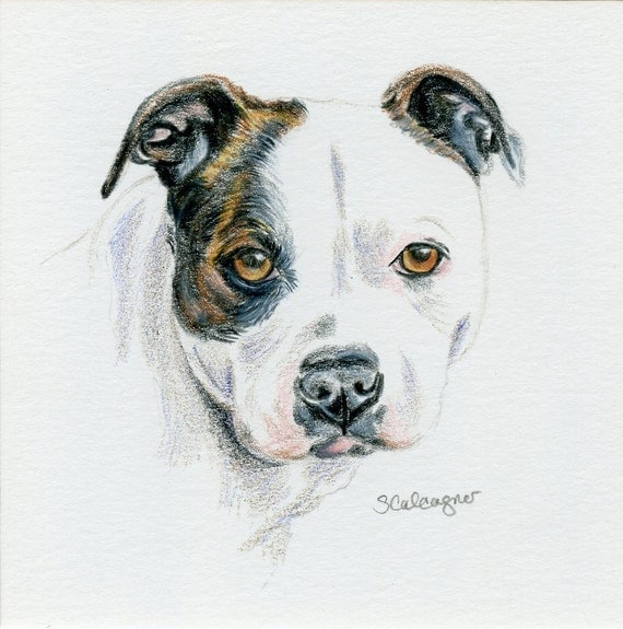Art mini couleur crayon pit bull pitbull chien dessin dog - Dessin de pitbull ...
