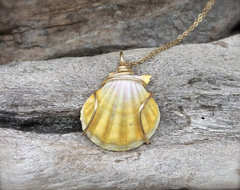 LARGE Sunrise Shell Necklace made in Hawaii - Hawaiian Sunrise Seashell Jewelry - Hawaii Sunrise Shell Jewelry - Hawaiian Seashell Necklace
