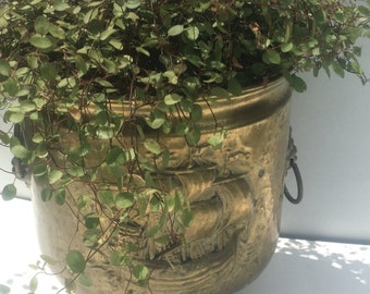 Nautical Brass Planter