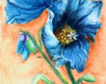 Miniature,Blue Poppy *****SALE****