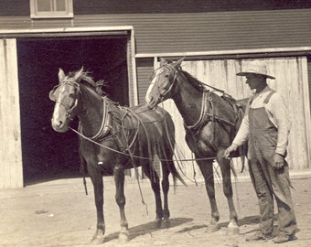 Cowboy PROUDLY Shows His TEAM of HORSES Photo Postcard Circa 1910s