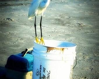 Beach photos - New 4x6 size - Photographic prints
