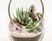 Succulent Terrarium Kit by Midnight Blossom - Featuring Two Beautiful Plants w/ Driftwood, Sand, Pebbles and Amethyst in a Slant Cut Vessel