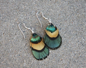 Mixed Plumage Peacock and Pheasant Feather Earrings
