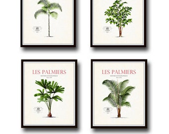 Vintage French Palm Tree Print Set No. 2, Giclee, Art Prints, Nautical Art, Beach Decor, Coastal Art, Botanical Print Set, Poster, Collage