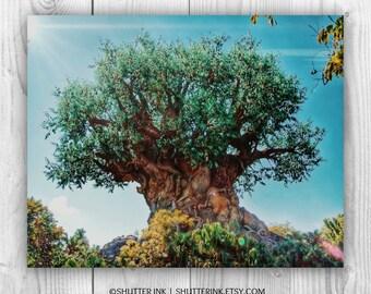 Walt Disney World Animal Kingdom Tree of Life. Wall Art Photograph - 8x10