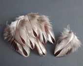 Francolin Feathers, Earring, Jewelry, Craft