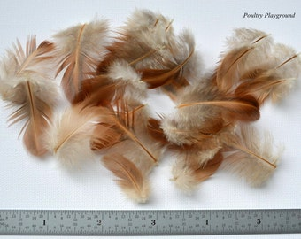 Feathers 1-2 inch wing bulk appx 3-4 gram