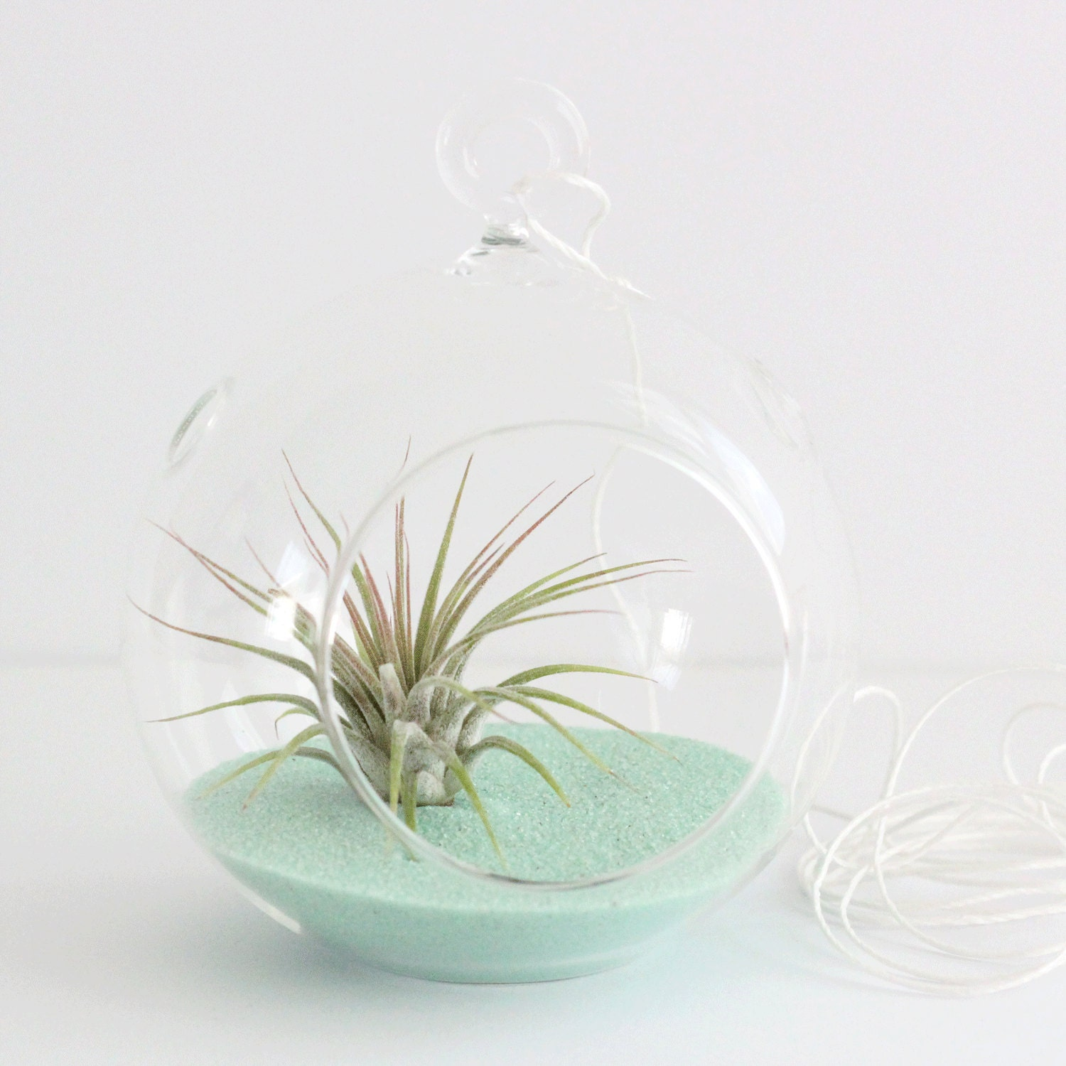 set of 5 air plant terrarium kit with mint sand great for bridesmaids parties and shower gifts