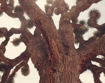 Shelter from the Sun - Photographic Print - Joshua Tree, native, southwest, american, california, blue, wanderlust, travel, mountains