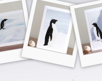 3 Blank Penguin Cards, Thank You or Birthday, Photography Cards
