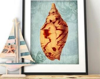 Sea shell art print -Coastal Life Shell 2 - seashell art print seashell print Nautical print Beach House Decor Bathroom wall art coastal art