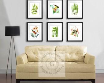 Spring Home Decor, Hummingbirds and Ferns Set of Botanical Prints set of 6 Wall Art Prints #6B03 antique birds botanical prints Gnosis