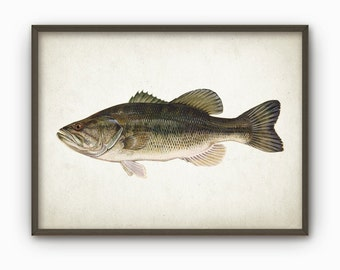 Largemouth Bass Fish Print - Freshwater Fish Print - Gamefish Wall Art - Large Mouth Bass Fishing - Angling Gift Idea (AB9)