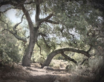 Tree Photo | Surreal Tree | Live Oak Tree Art | Woodland Photo | Enchanted Forest Photo | O'Neill Park | Trabuco Canyon | California Nature