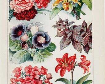 1923 Antique houseplants print. old Botanical, flowers. Carnation, orchid, begonia