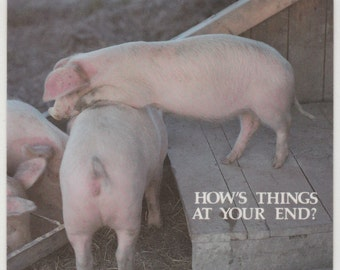 How ' s Things at Your End ? ~ Silly Postcard ~ Pig Humor ~ RUSS ~ Made in USA ~ Postcard / Coaster