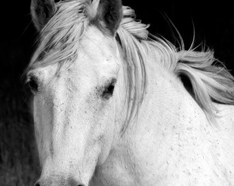 White Horse Nature Photography Equine Art Carmargue Horse Black and White Horse Art Black and White Horse Photography Horse Picture Wall Art