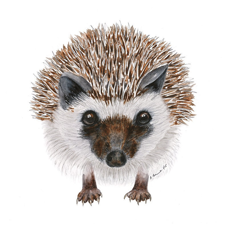 Woodland Animal Art Hedgehog Watercolor Large Print Animal