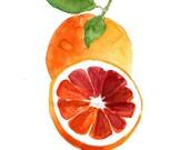 Blood orange study number three art print of  watercolor painting, citrus,  Botanical painting, Kitchen art, minimalist, orange green