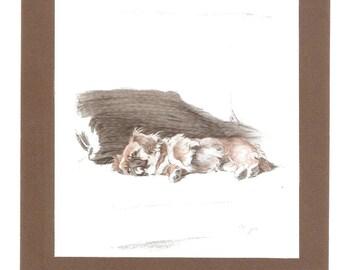 Cecil Aldin Puppy Study Sleepy Pekinese