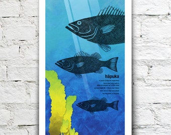 Hāpuka illustration print – New Zealand native fish series. 2 sizes, limited series.
