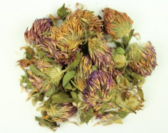 Red Clover Blossoms - Premium