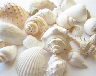 White Seashells Mix-1 Pound-Beach Wedding White Seashells-Beach Wedding Decor-Seashell Mix-White Seashells-Boxed Seashells-Seashells Bulk