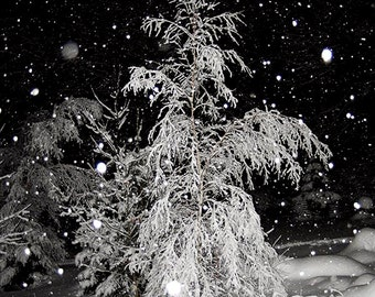 Winter Art Photo,Picture of Trees in Winter,Tree Wall Art,Winter Snow Art Photograph,Trees in Snow,Snowy Landscape Art,Night Snow Storm Art